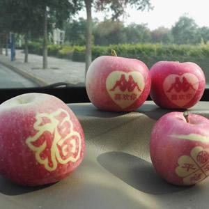 旬邑红富士艺术苹果
